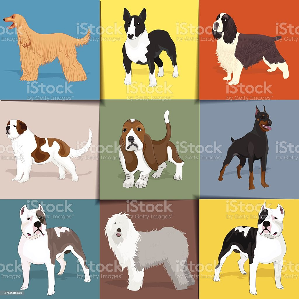 Set of dogs with square background. vector art illustration
