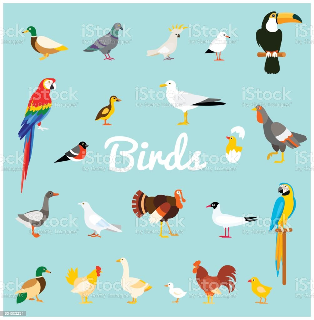 A set of domestic and wild birds in a flat style. royalty-free a set of domestic and wild birds in a flat style stock illustration - download image now
