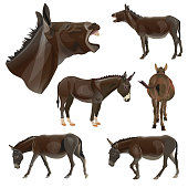 Set of donkeys in different poses. Vector illustration isolated on the white background