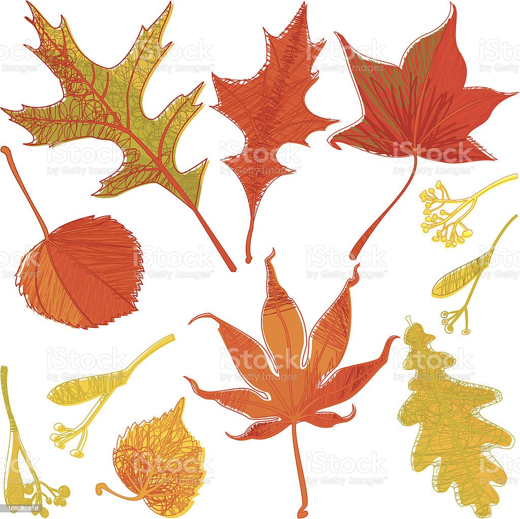 Set of Doodle Autumn Leaves royalty-free set of doodle autumn leaves stock vector art & more images of abstract