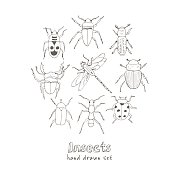 Set of doodle sketch Bugs and beetles
