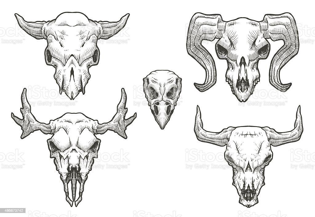 Set of Drawing animal's skulls vector art illustration