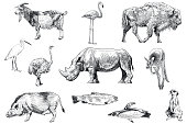 Vector illustration set of 11 various animals. Carefully labeled and grouped in layers panel