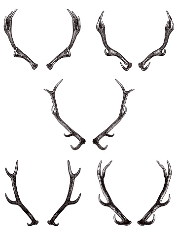 Collection of five vector antlers illustration. Carefully grouped in layers panel. Easy to select and edit
