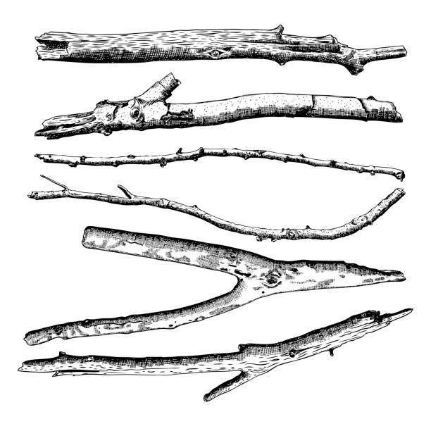 set of driftwood, ground floor hand drawn ink rustic design elements collection. dry tree branches and wooden twigs. vintage highly detailed classic ink drawings bundle art in engraved style. vector. - wood texture stock illustrations