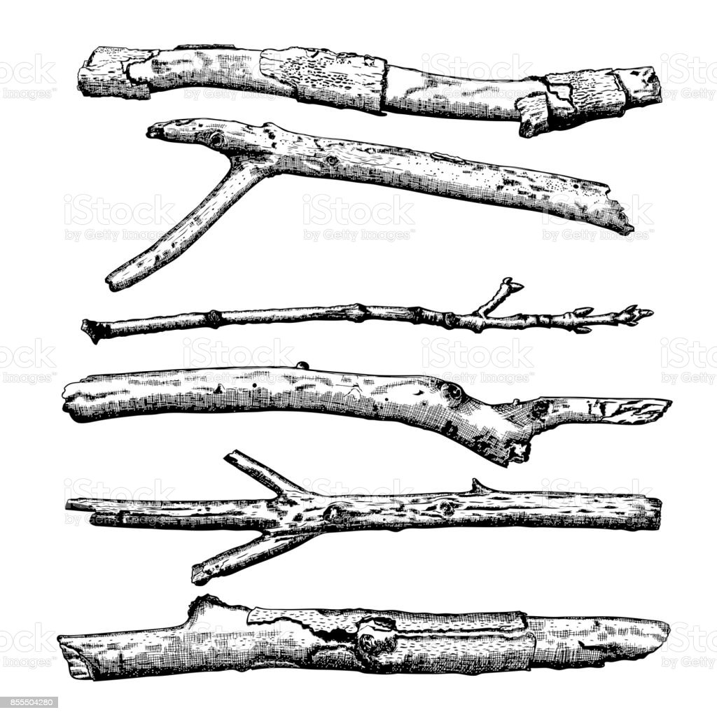 Set of Driftwood, ground floor hand drawn ink rustic design elements collection. Dry tree branches and wooden twigs. Vintage highly detailed classic ink drawings bundle art in engraved style. Vector. vector art illustration