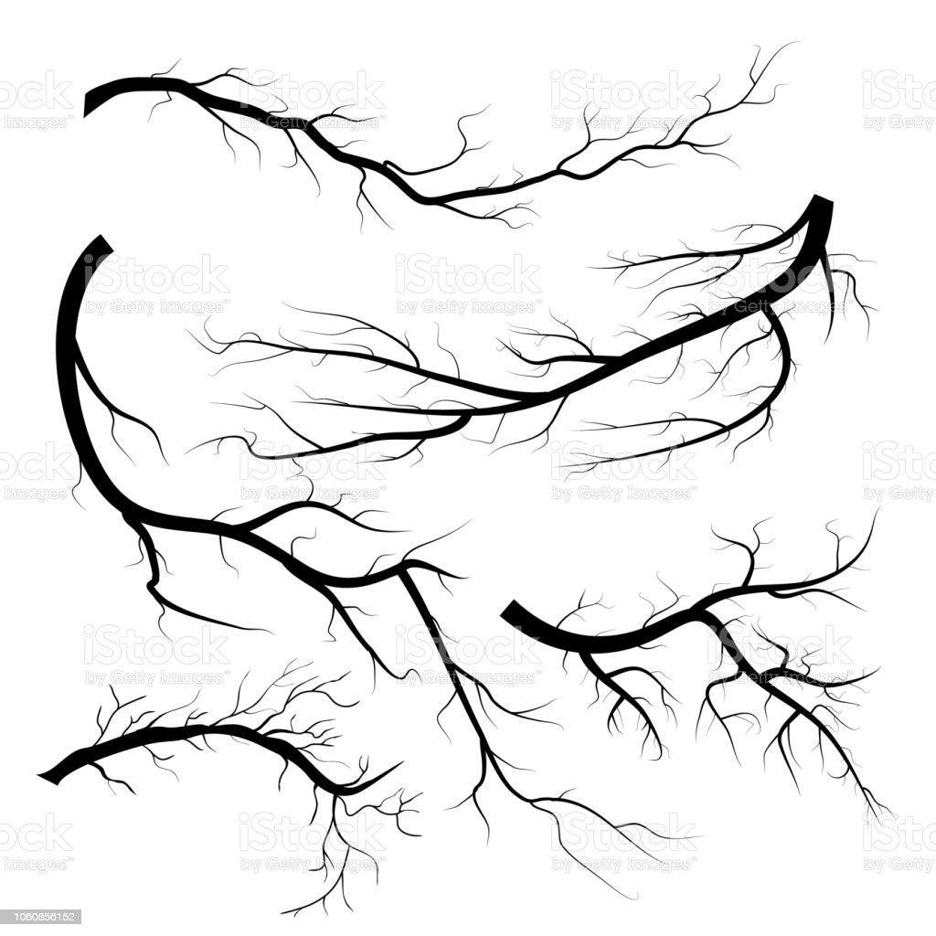 Beyaz Arka Plan üzerinde Kuru Dal Grubu Ağaçlar Dal Siluet Izole