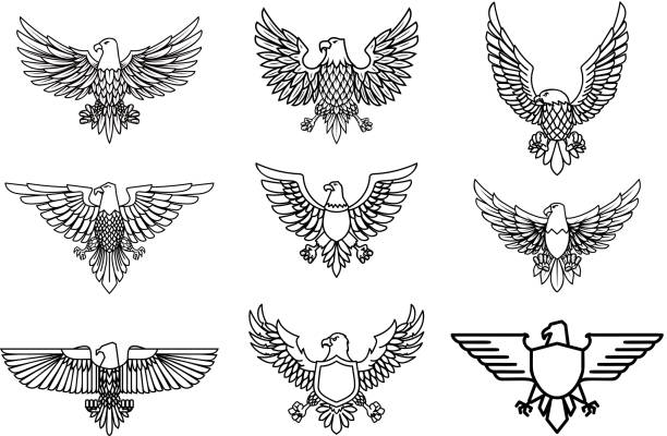 Set of eagle icons isolated on white. Design element for label, emblem, sign. Set of eagle icons isolated on white. Design element for label, emblem, sign. Vector illustration aircraft wing stock illustrations