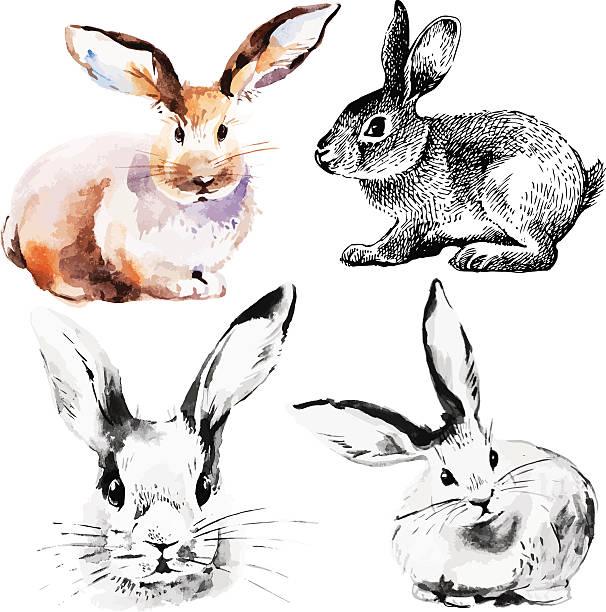 satz von ostern hasen  - kaninchen stock-grafiken, -clipart, -cartoons und -symbole