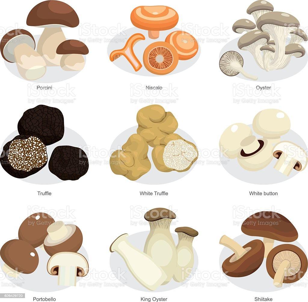 set of edible mushrooms vector art illustration