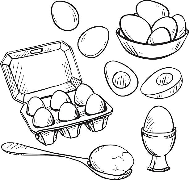 stockillustraties, clipart, cartoons en iconen met set of eggs drawings. hand drawn. vector illustration. - egg