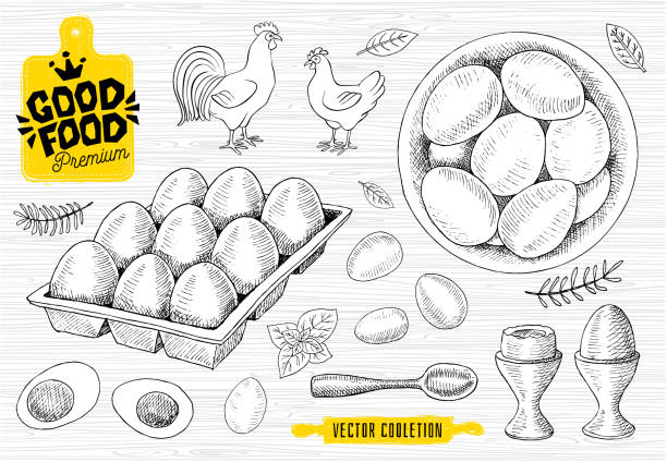 set of eggs, plate, han, egg tray. raw eggs, breakfast, spoon, sketch style, white background. - egg stock illustrations