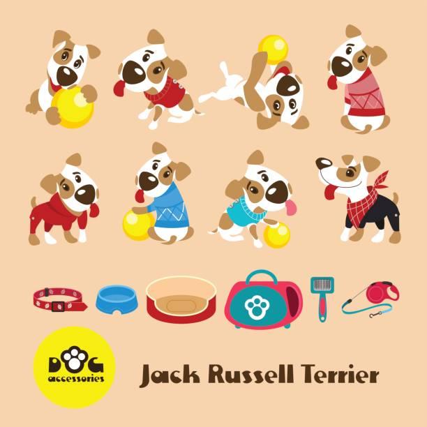 set von acht lustigen hunden jack russell terrier in kleidung. - hundebetten stock-grafiken, -clipart, -cartoons und -symbole