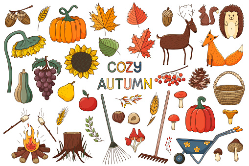 A set of elements on the theme of autumn, cozy home, hugge. A large design collection of colored doodle elements with a stroke and fill. Flat. Forest. Vector illustration. Isolated on white