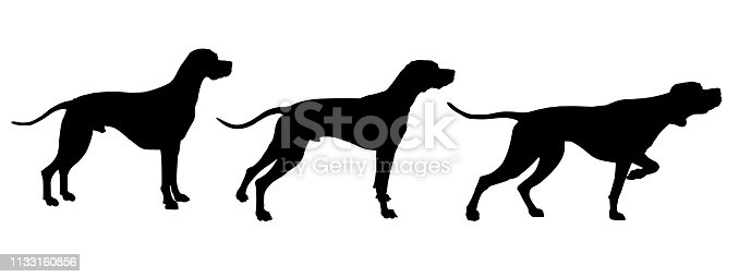 Set of English pointer silhouettes in various poses. Vector illustration isolated on white background