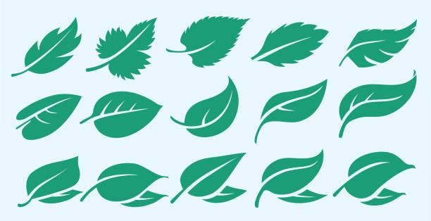 set of environmentally friendly fresh eco renewable symbolic sustainable natural foods organic icons logo leaf / leaves a group of natural leaf symbols and Icons that portray sustainablity, fresh, growth,  spring, life in the summer, icon, logo, mark, and emblem. leaf stock illustrations