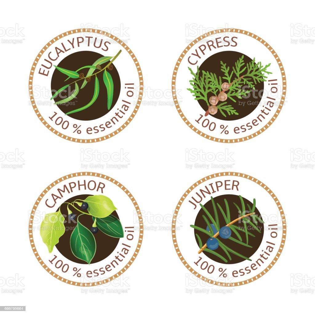 Set Of Essential Oils Labels Eucalyptus Cypress Camphor Tree Juniper
