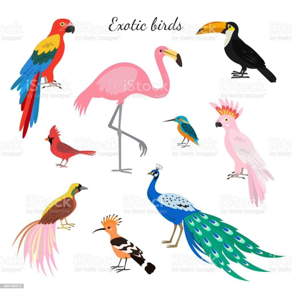 Set Of Exotic Birds On White Background Stock Illustration Download Image Now Istock