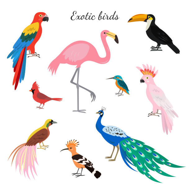 set of exotic birds on white background. - peacock stock illustrations