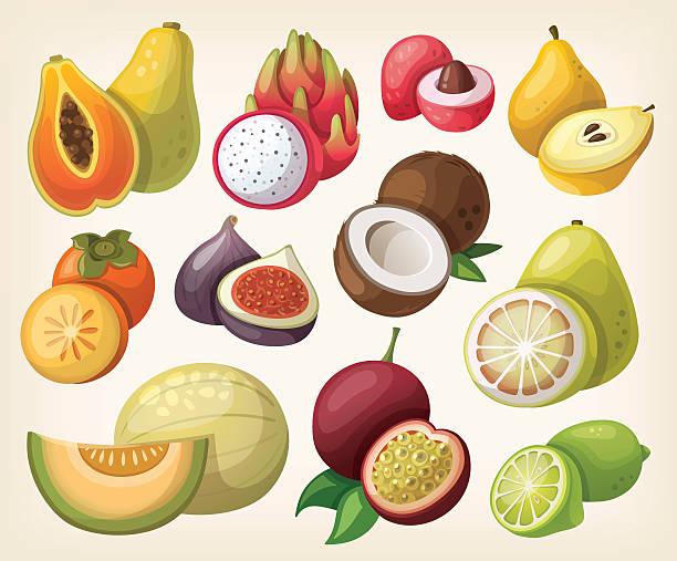 bildbanksillustrationer, clip art samt tecknat material och ikoner med set of exotic fruit - cactus lime