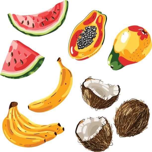 ilustrações de stock, clip art, desenhos animados e ícones de set of exotic fruit. vector illustration - oleo palma