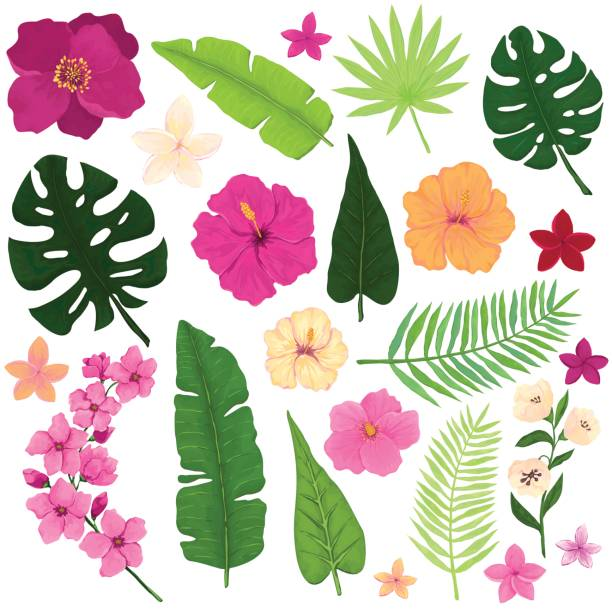 Set of Exotic Tropical Flowers and Leaves Floral Set of Exotic Tropical Flowers and Leaves tropical flower stock illustrations