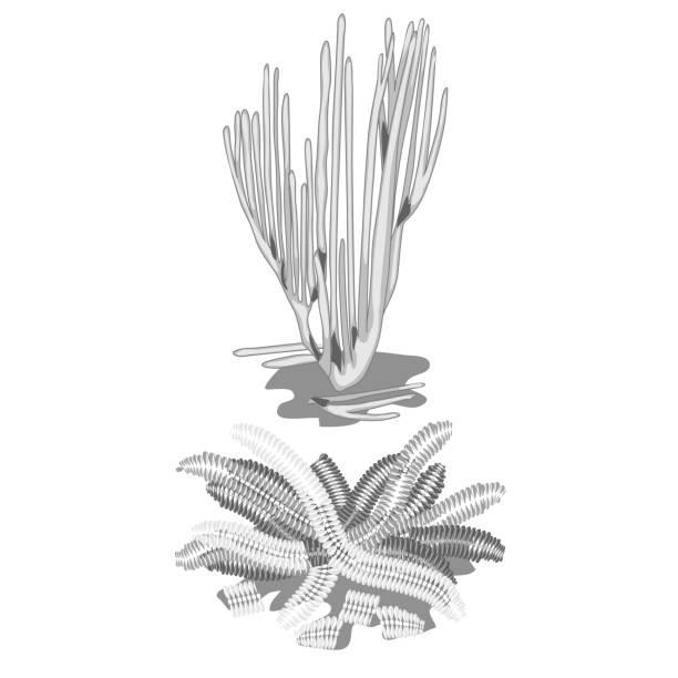 set of extinct discolored algae isolated on white background. vector cartoon close-up illustration - fossilized leaves stock illustrations