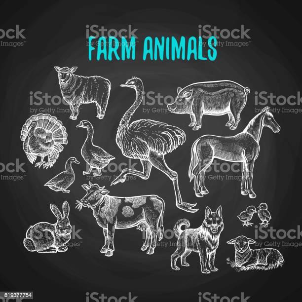 Set of farm animals in chalk style on blackboard vector id819377754?b=1&k=6&m=819377754&s=612x612&h=abt6jgapn7cmhjkc9fgyc lrvuwdt 4xxxtzmaqa6ss=