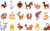 Set of farm animals. Livestock and poultry. Various domestic birds, horses, pig, rabbit, sheep, cats and dogs. Colorful flat vector design