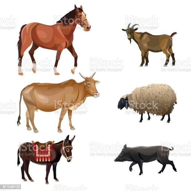 Set of farm animals vector id971036120?b=1&k=6&m=971036120&s=612x612&h=cvmsiprihfrxhfsal6bpcsyexsyfkgkk9hyjgtdtoxe=