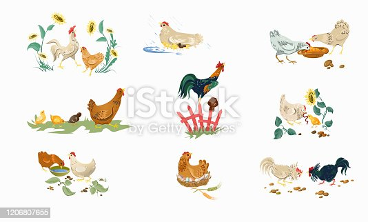 istock Set of farm or home chickens bird with rooster eating 1206807655