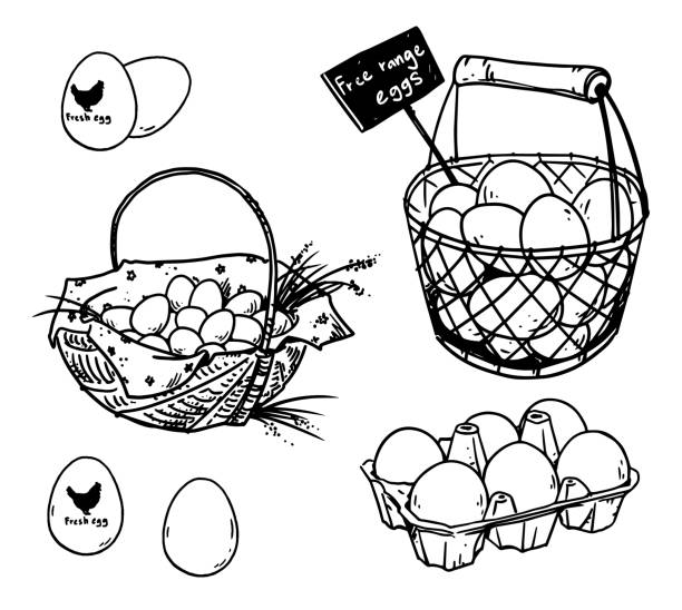 stockillustraties, clipart, cartoons en iconen met set farmer's eieren tekeningen, vectorillustratie - egg