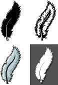 Set of Feathers types with different concept