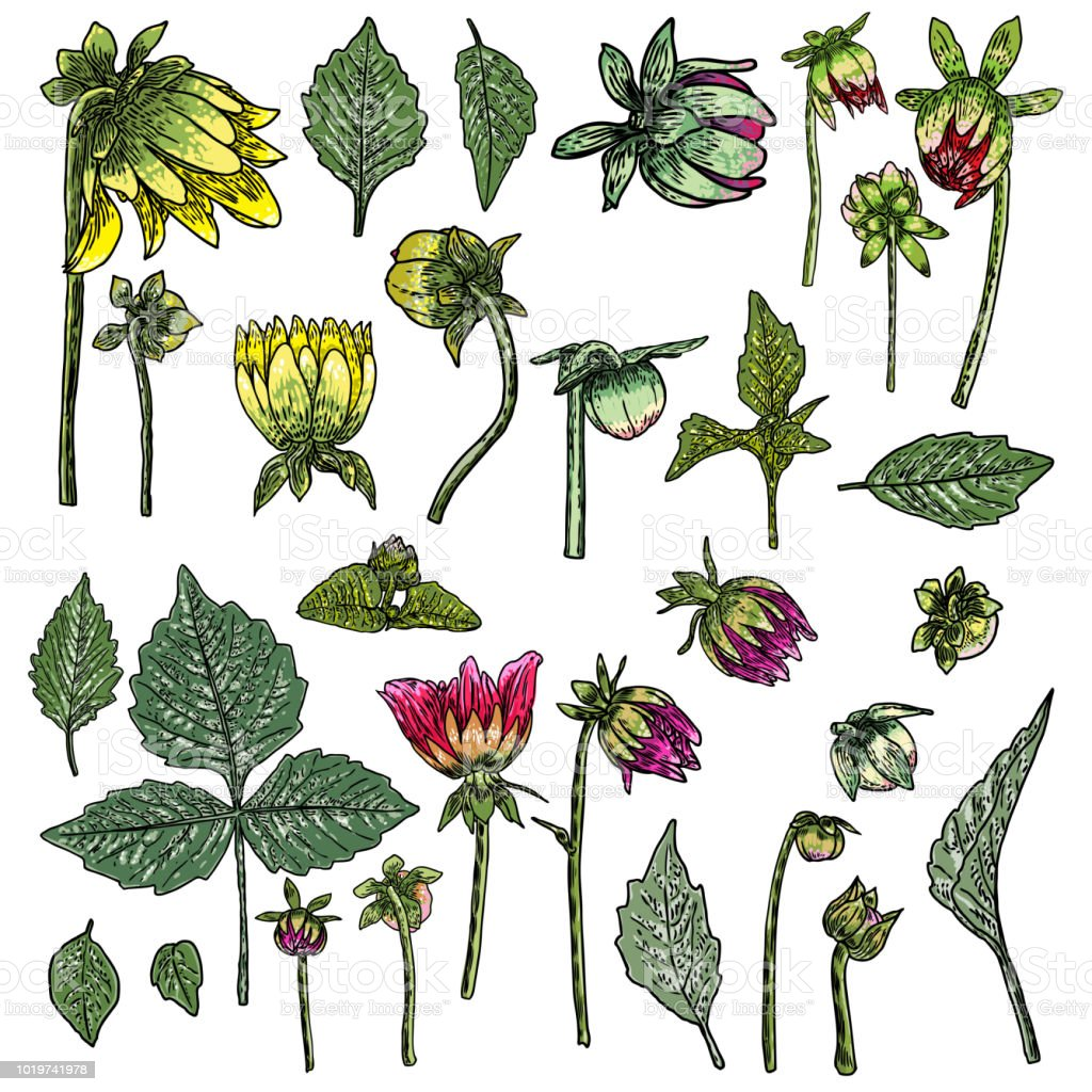 Set of fern leaves and half open buds of daisy dahlias zinnia and set of fern leaves and half open buds of daisy dahlias zinnia and izmirmasajfo