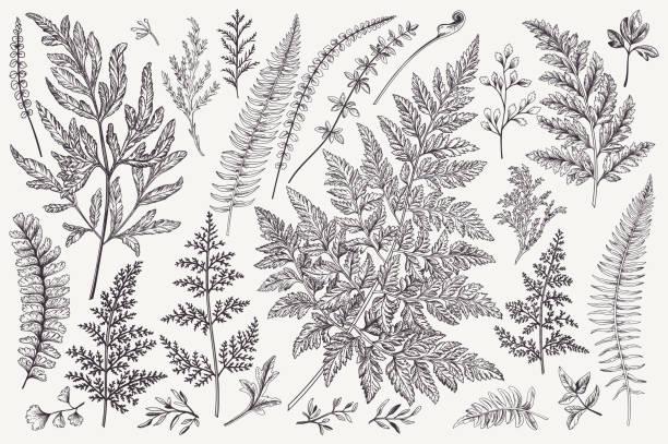 Set of fern leaves. vector art illustration