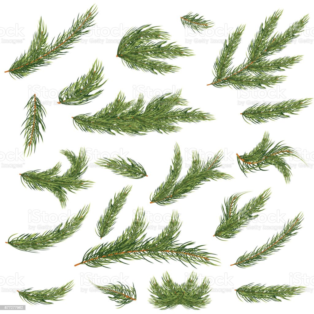 Set of Fir Branches. Christmas Tree. royalty-free set of fir branches christmas tree stock illustration - download image now