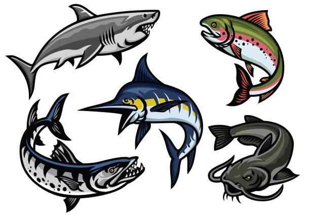 satz der fische illustration in farbigen - haifischköder stock-grafiken, -clipart, -cartoons und -symbole