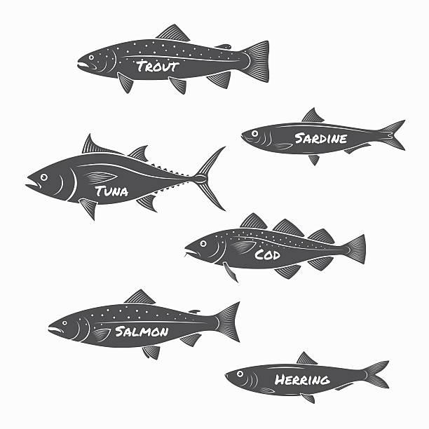 illustrazioni stock, clip art, cartoni animati e icone di tendenza di silhouette gruppo di pesce su sfondo bianco. - trout