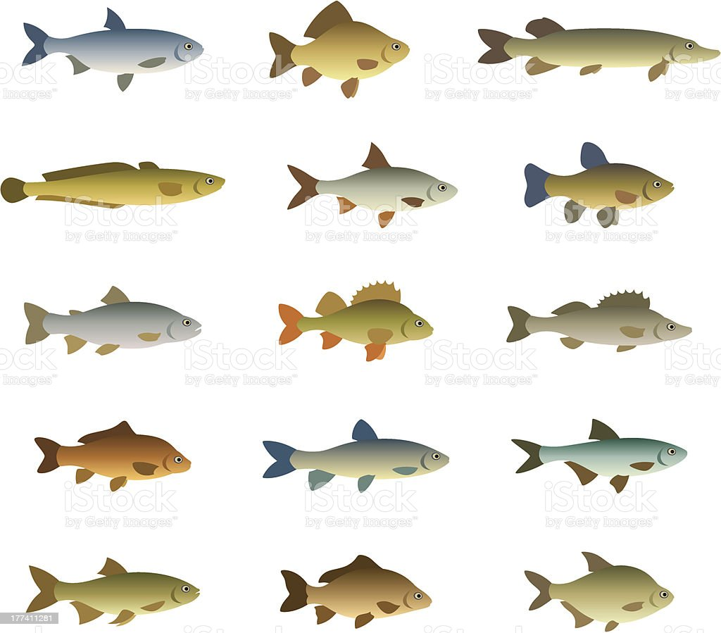 Set of fish vector art illustration