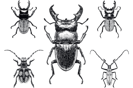 Set of five drawings of insects, among them stag beetle on white background