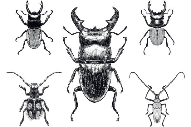 Set of five drawings of insects, among them stag beetle on white background Carefully grouped and labeled in layers panel. Easy to select and edit beetle stock illustrations
