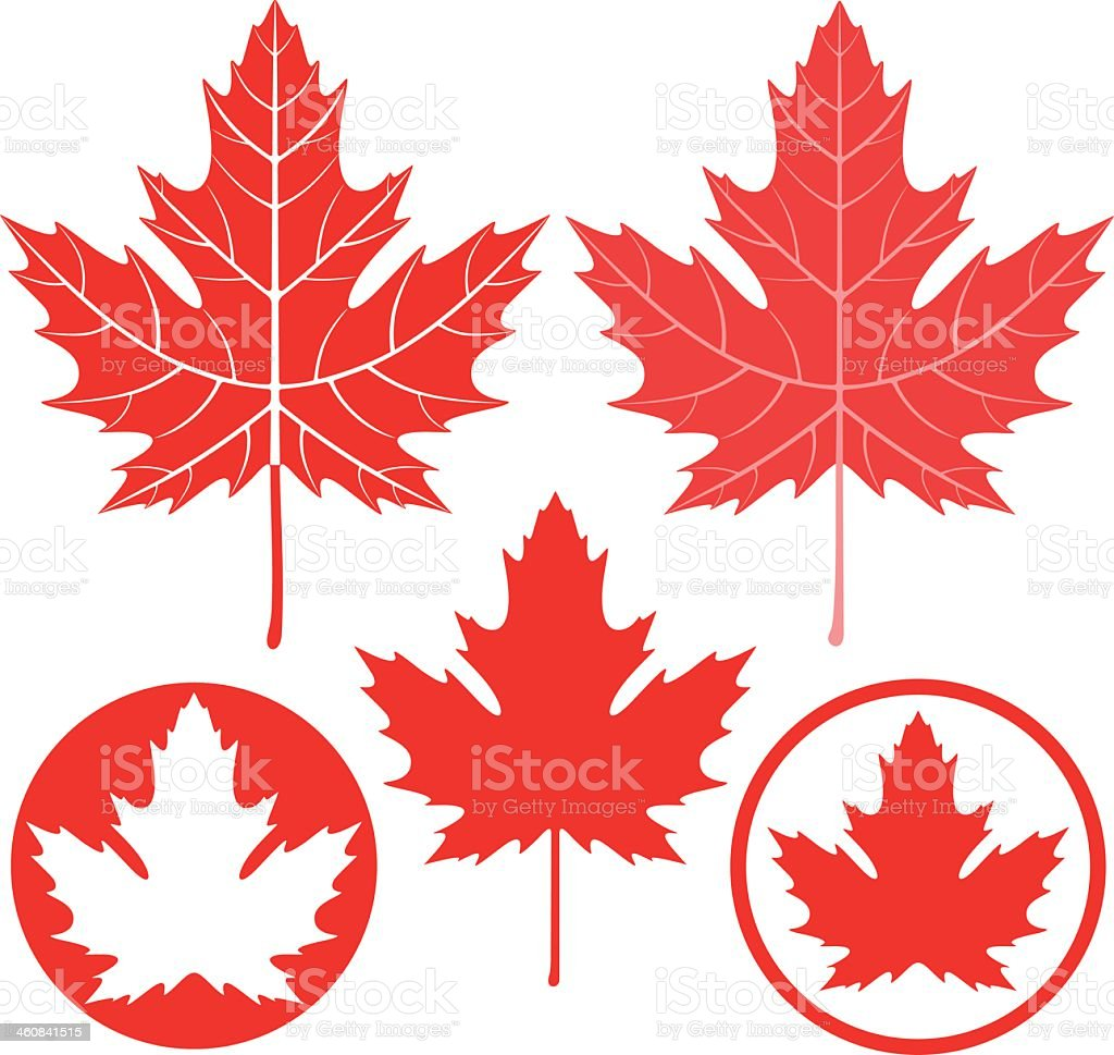 Set of five red and white drawings of maples leaves vector art illustration