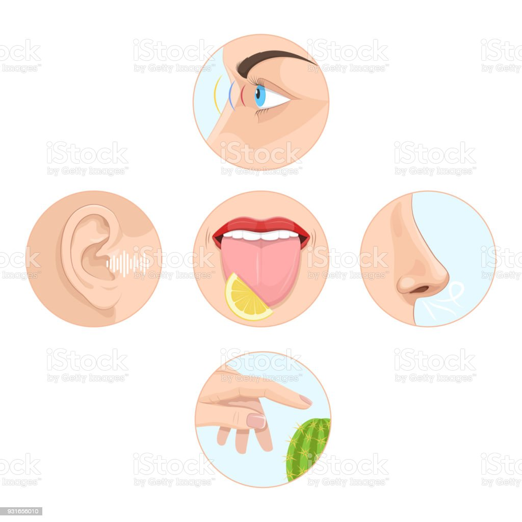 Set of five senses man. Anatomy, human organs vector art illustration