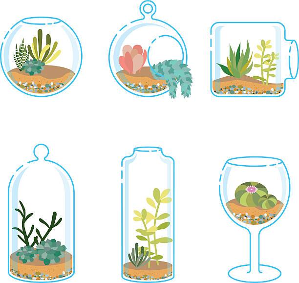 ein set von flachen florariums mit verschiedenen sukkulenten und kaktus - glasblumen stock-grafiken, -clipart, -cartoons und -symbole