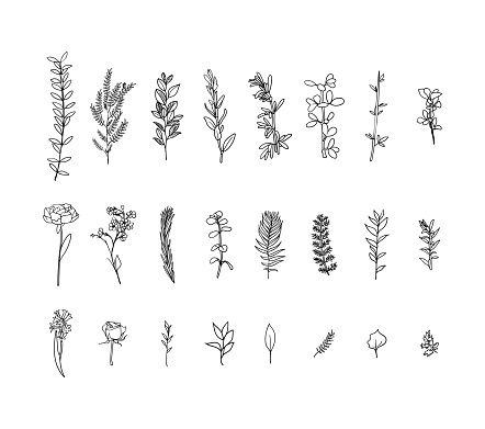 Set of flora branches. Hand drawn vector Vintage floral. Sketch ink illustration. leaves, flowers and birds.