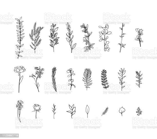 Set of flora branches hand drawn vector vintage floral sketch ink vector id1125992719?b=1&k=6&m=1125992719&s=612x612&h=qgxbykde8nt9ecf4dw7mxqzo caeboguduya1pj9w2k=
