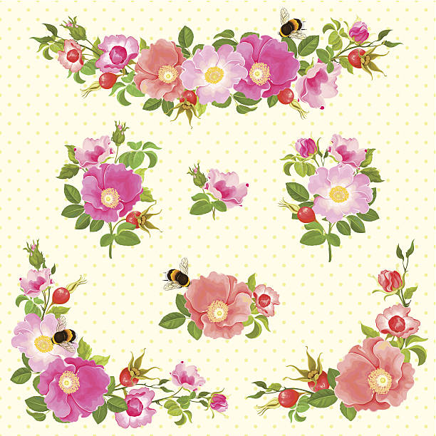 Set of floral decoration elements. Set of decoration elements with dogroses and bumblebees, vector illustration 10 eps. wild rose stock illustrations