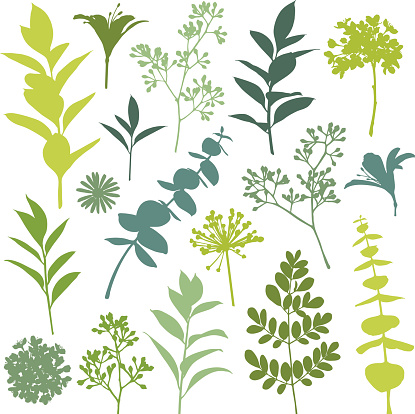 Set of Flower and Leaf Silhouette Design Elements