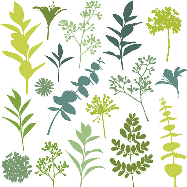 bildbanksillustrationer, clip art samt tecknat material och ikoner med set of flower and leaf silhouette design elements - eucalyptus