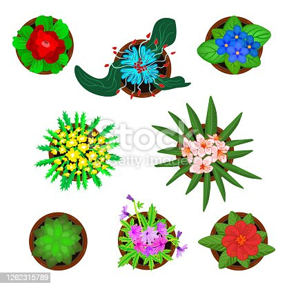 Plants icon collection top view with pets flowers. Home green flowers in pots from above. For interior design, gardening, housing. Stock vector illustration